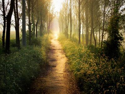 Mensaje Canalizado del Arcángel Gabriel: Te acompañamos en el Camino
